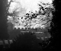Mlha druhá zámecká