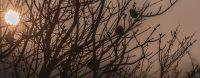 ráno na ptačím stromě