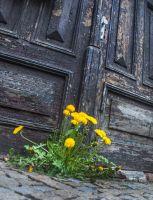 jaro přede dveřmi