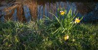 jaro na Vysočině 2