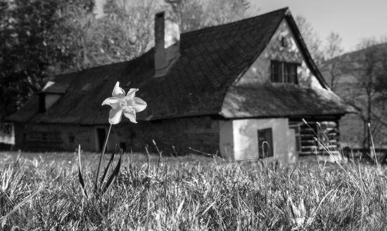 jaro na Vysočině 4