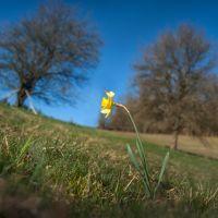 jaro na Vysočině 5